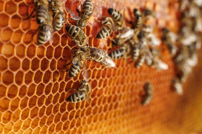 از فعالیت های زنبور عسل ذخیره کردن گرده گل