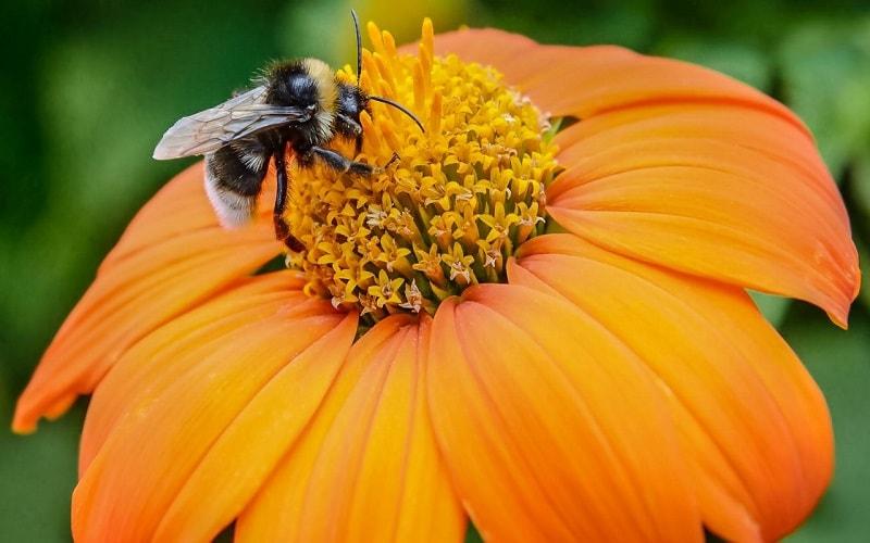 از فعالیت زنبورعسل داخل کندو غارتگری توسط زنبور عسل