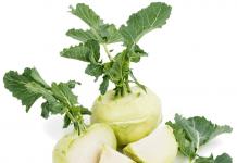 گیاه کلم