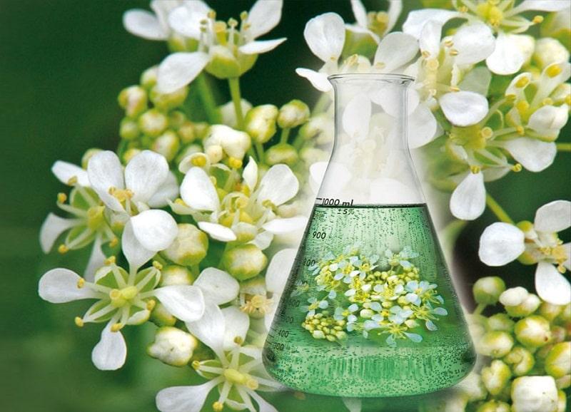 ترکیبات شیمیایی و خواص درمانی موچه