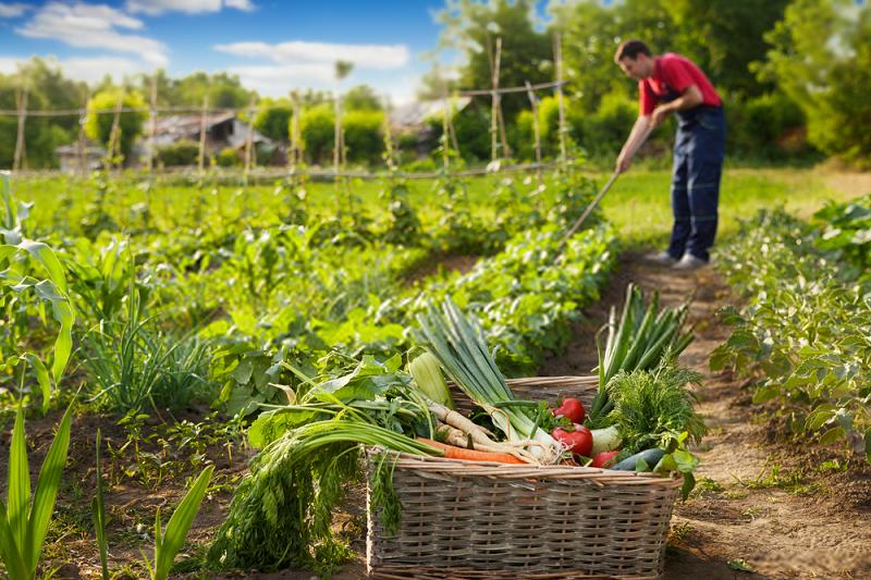 جلوگیری از ورود عوامل خسارت زا به داخل مزرعه