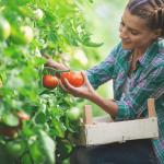 چالش های کشاورزی ارگانیک