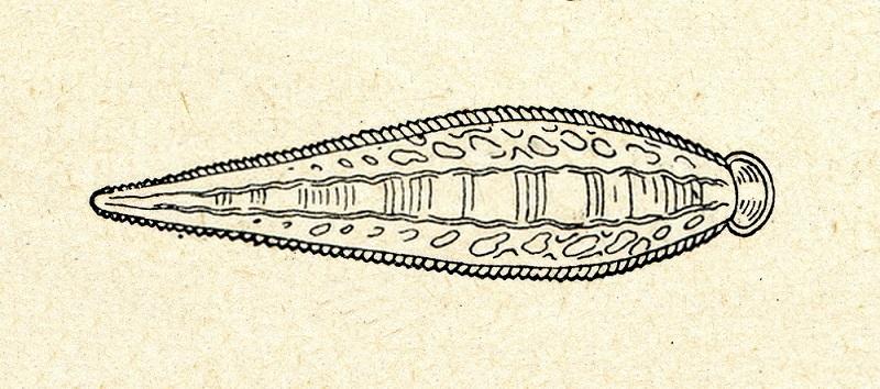 زالوهای دریای خزر