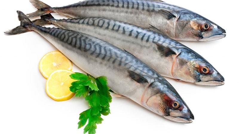 مزاج گوشت ماهی