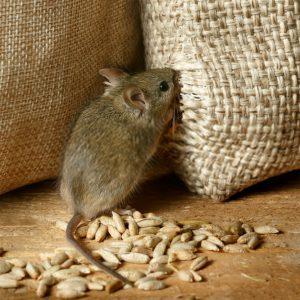 موش کش ارگانیک