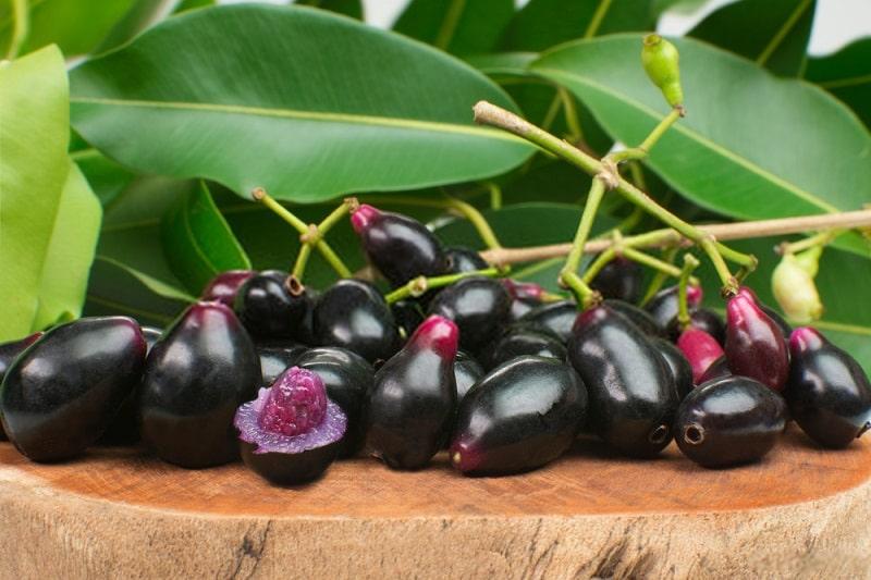 گیاهان تیره مورد