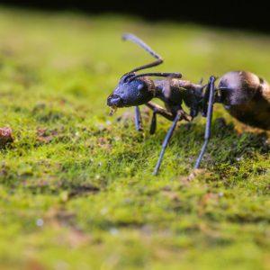 مورچه کش ارگانیک