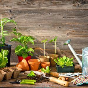 کشاورزی ارگانیک در جهان