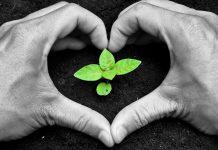 جنبش ارگانیک