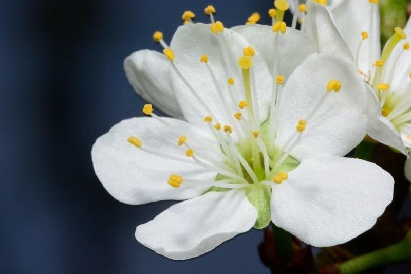 ترکیبات شیمیایی گیاهان تیره گل سرخ