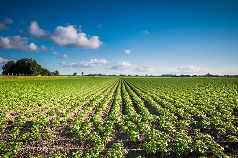 ۲- کشاورزی پایدار