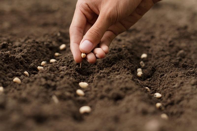 مزایای کاشت مستقیم در بقایای گیاهی با بذرکار بدون خاکورزی