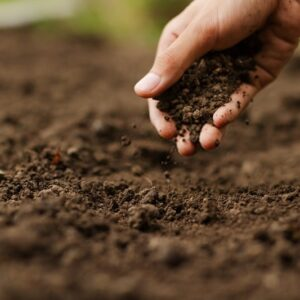 اهمیت خاک و خاکورزی در زراعت ارگانیک