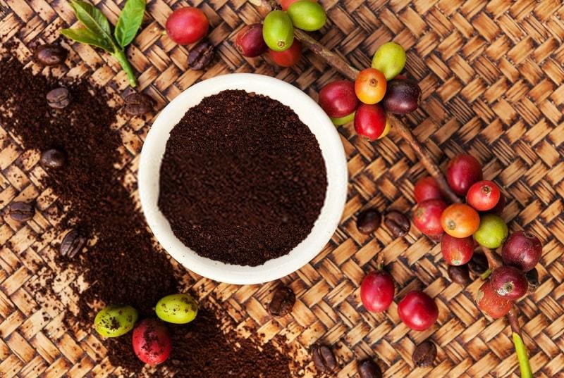 میوه قهوه