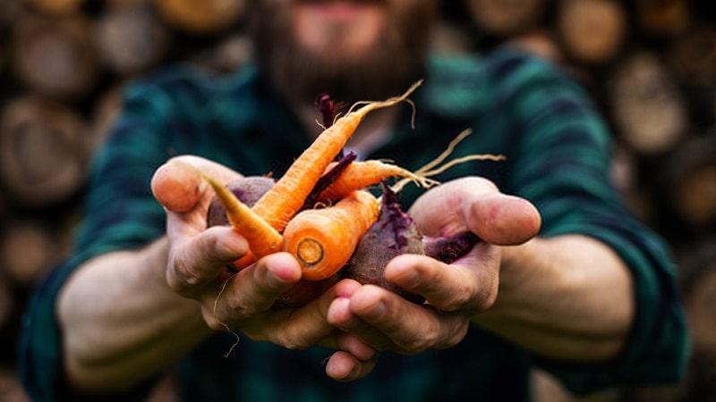 تأثير مفید ماده غذایی