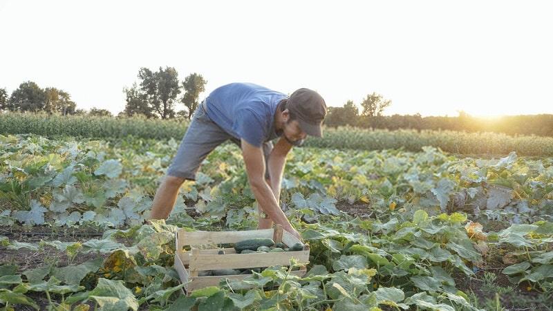 مدیریت تغذیه گیاهی