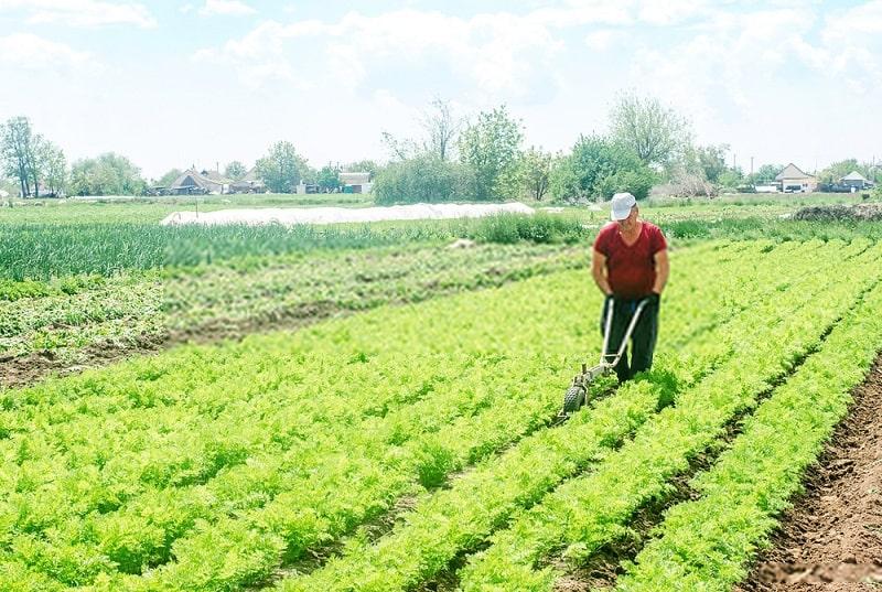 کاهش عملیات خاکورزی در کشاورزی ارگانیک