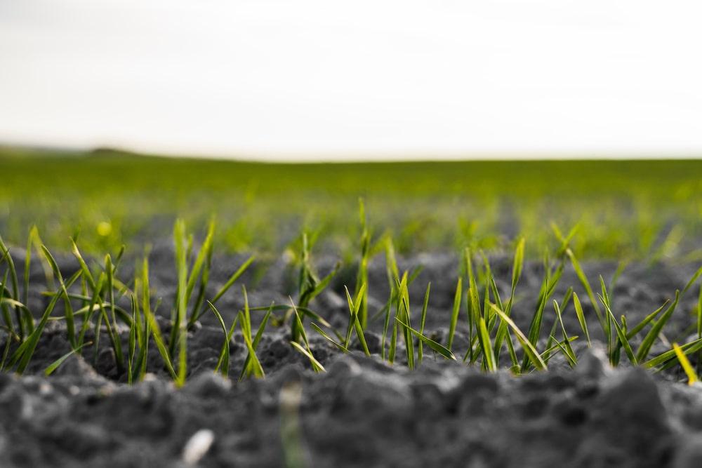 اثرات مضر کشاورزی متداول بر سلامتی انسان