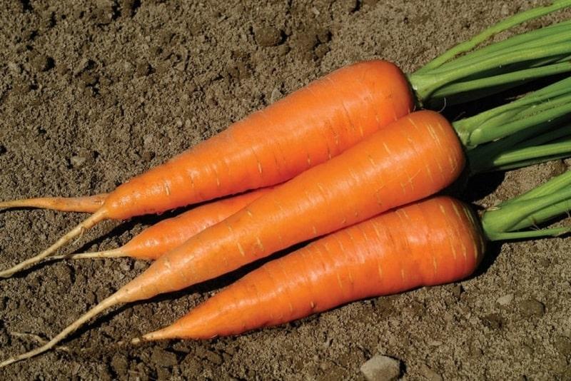 اثر نیرو دهنده تخم هویج