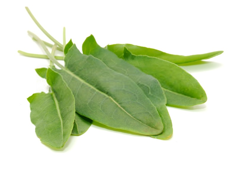 Rumex pulcher - گونه ای از گیاه ترشک
