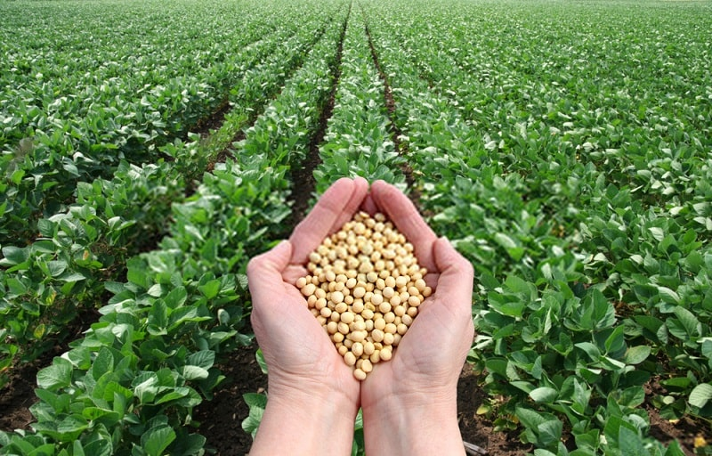 تغذیه گیاهی در زراعت