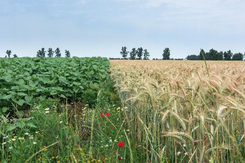 چگونگی تکثیر و پرورش گیاه