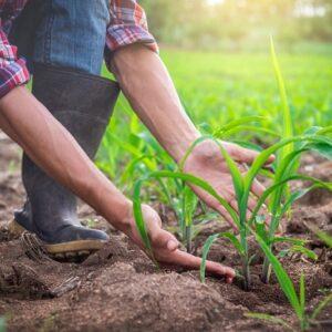 تنوع زیستی در کشاورزی ارگانیک