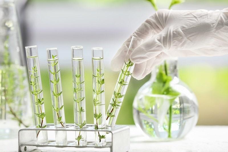 مهندسی ژنتیک چگونه عمل می کند؟