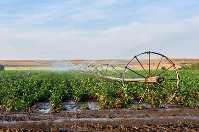 کاربرد سوپر جاذب ها در کشاورزی