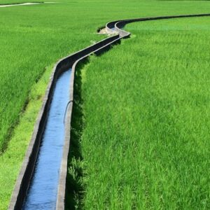 آبیاری در زراعت ارگانیک