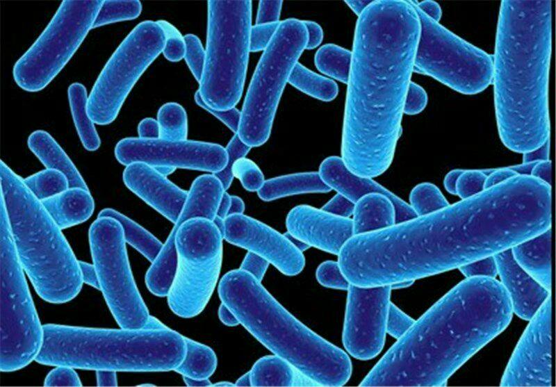 میکروارگانیسم