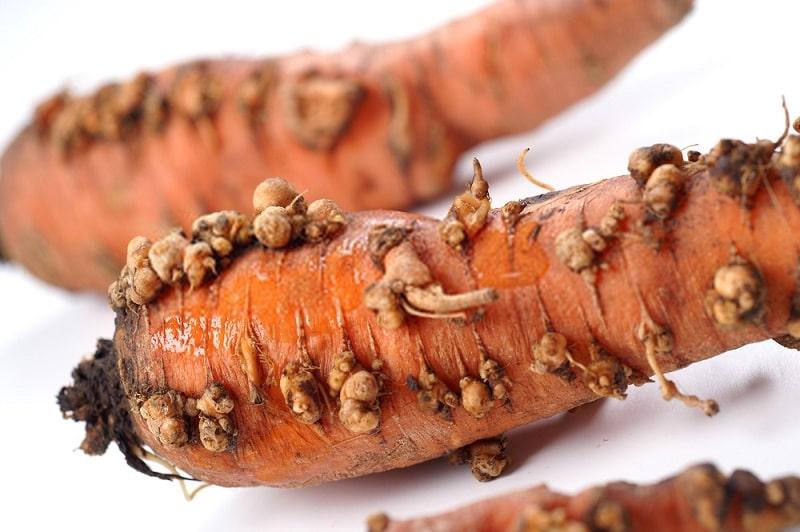 کنترل بیماریهای گیاهی