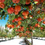 گواهی محصولات ارگانیک