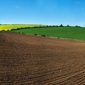 تازه های زراعت ارگانیک