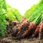 چالش های محصولات ارگانیک