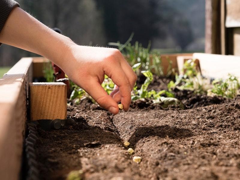 محصولات ارگانیک زیستی