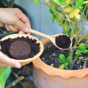کودهای زیستی یا بیولوژیک در زراعت ارگانیک