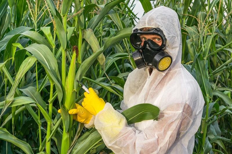 مهندسی ژنتیک و زراعت ارگانیک