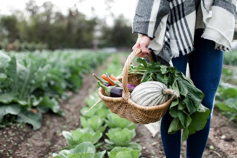ویژگیهای کشاورزی زیستی