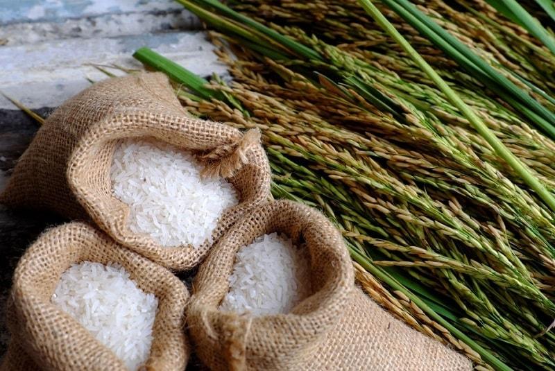 منشا اصلی برنج