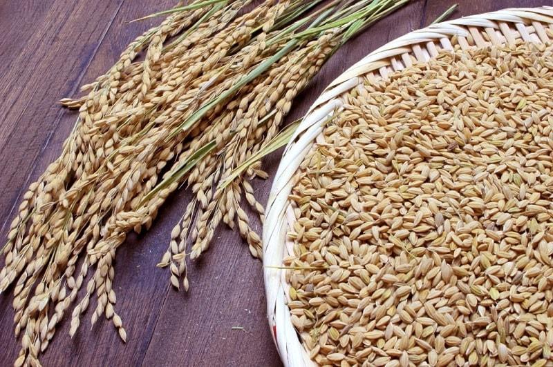 ساکه - نوعی برنج