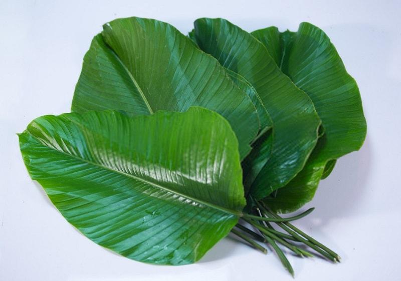 Thaumatococcus danielli Benth - از گیاهان مفید دیگر تیره زنجبیل - مجموعه هل