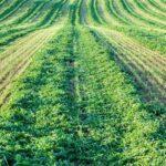 تناوب زراعی از کشاورزی رایج تا ارگانیک