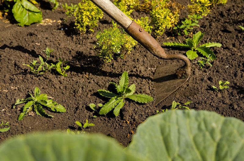 گیاهان زراعی پوششی یا خفه کننده