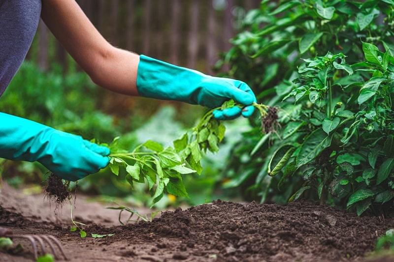 گیاهان مفید و کارآمد در تناوب زراعی