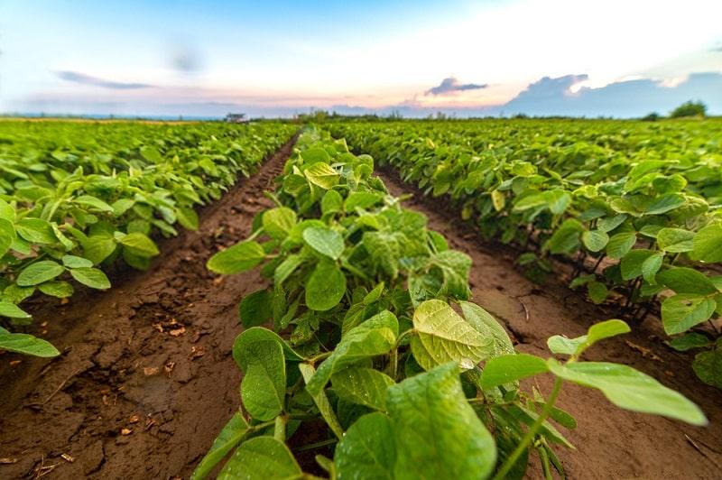 اثرات کشت تناوبی بر روی حاصلخیزی خاک و تغذیه گیاهان