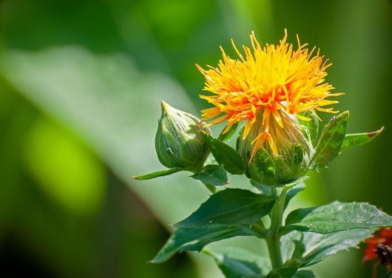 زمان کاشت گیاه گل رنگ