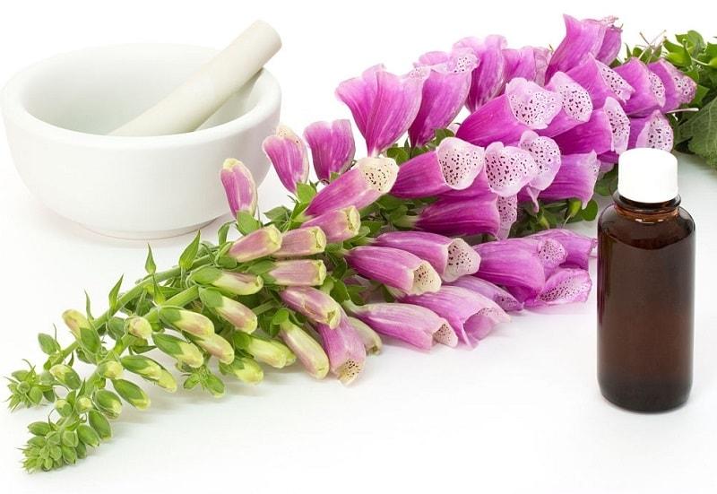 صور دارویی گل انگشتانه