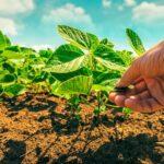 توالی محصولات در زمین های زراعی