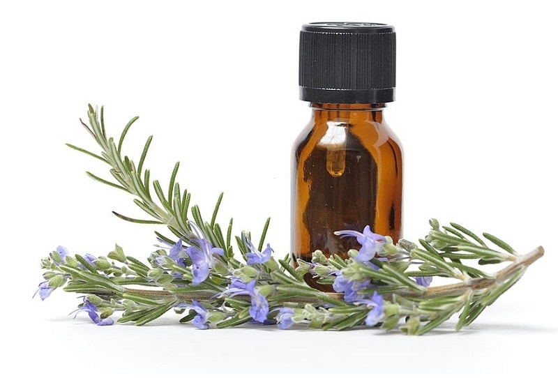 خواص درمانی گل رزماری